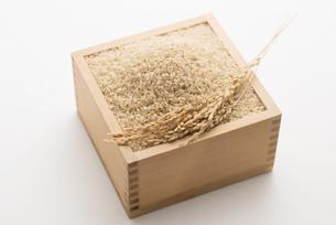 玄米と稲穂の写真素材 [FYI04560116]