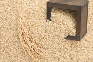 玄米と稲穂の写真素材 [FYI04560136]