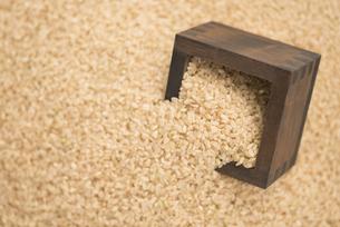 玄米の写真素材 [FYI04560137]