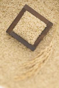 玄米と稲穂の写真素材 [FYI04560138]