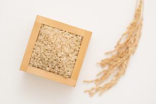 玄米と稲穂の写真素材 [FYI04560146]