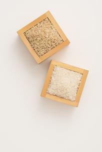 白米と玄米の写真素材 [FYI04560150]