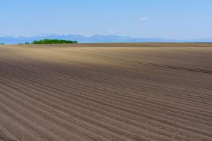 春の畑の写真素材 [FYI04560525]