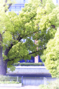 新緑の木の写真素材 [FYI04560627]