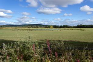 カナダガンが集まる草地と池の写真素材 [FYI04560717]
