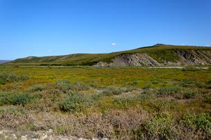 夏のアラスカ州ノーススロープの丘の写真素材 [FYI04560719]