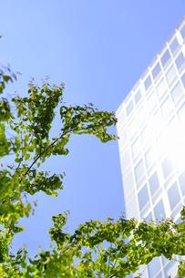 新緑の葉っぱとビルの写真素材 [FYI04560829]