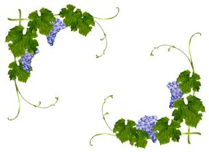 葡萄のフレームのイラスト素材 [FYI04560923]
