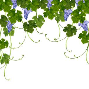 葡萄の水彩画のイラスト素材 [FYI04560924]