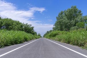 夏空と真っすぐな道の写真素材 [FYI04561239]