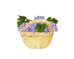 葡萄とバスケットのイラスト素材 [FYI04561277]