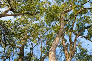 木の写真素材 [FYI04561324]