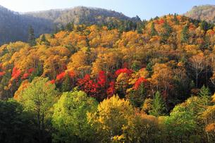 9月 三国トンネル周辺の紅葉  -北海道の秋-の写真素材 [FYI04561385]