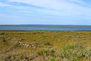 夏のアラスカ、Sag Riverザック川の写真素材 [FYI04561418]