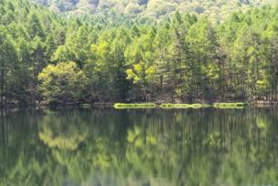春の御射鹿池に映り込む新緑の森の写真素材 [FYI04561971]
