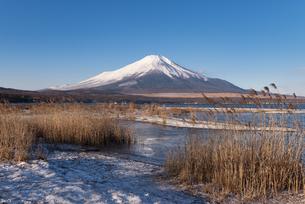 冬の山中湖より望む富士山の写真素材 [FYI04561973]