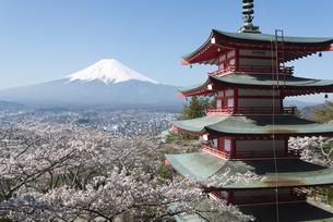 新倉山浅間公園より望む五重塔と桜と富士山の写真素材 [FYI04561982]