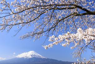 山梨県 富士山と河口湖の桜の写真素材 [FYI04562161]