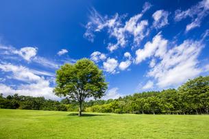 木と雲の写真素材 [FYI04562306]