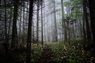 霧の森の写真素材 [FYI04562937]