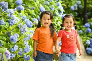 紫陽花の前に並んで立つ女の子の写真素材 [FYI04563102]