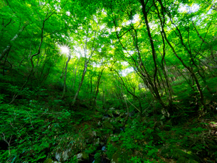 Forest Greenの写真素材 [FYI04563309]