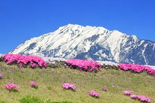蓮華岳と農具川河川公園のシバザクラの写真素材 [FYI04563796]
