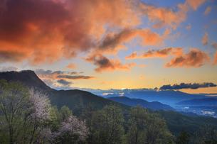 十観山から望む子檀嶺岳と浅間山と桜と雲間のグリーンフラッシュの写真素材 [FYI04563822]