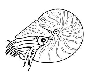 オウムガイ 深海魚 キャラクター イラストのイラスト素材 [FYI04564231]