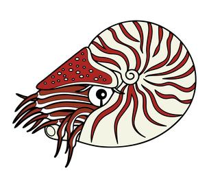 オウムガイ 深海魚 キャラクター イラストのイラスト素材 [FYI04564232]