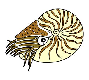 オウムガイ 深海魚 キャラクター イラストのイラスト素材 [FYI04564234]
