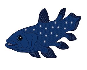 シーラカンス 深海魚 キャラクター イラスト クリップアートのイラスト素材 [FYI04564244]