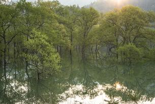 白川湖の水没林の写真素材 [FYI04564419]
