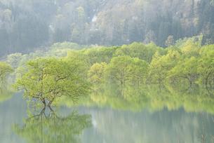 白川湖の水没林の写真素材 [FYI04564429]