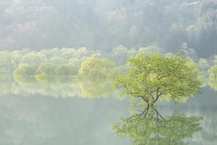 白川湖の水没林の写真素材 [FYI04564432]