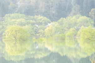 白川湖の水没林の写真素材 [FYI04564475]