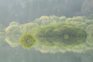 白川湖の水没林の写真素材 [FYI04564477]