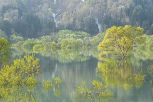 白川湖の水没林の写真素材 [FYI04564479]