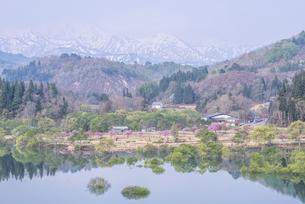 白川湖の水没林の写真素材 [FYI04564488]