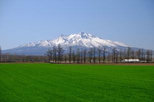 残雪の秀峰斜里岳と新緑の麓の写真素材 [FYI04564517]