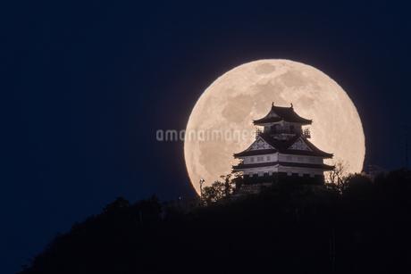 宵の月の写真素材 [FYI04564554]