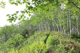 東ヌプカウシヌプリ山の頂上付近の写真素材 [FYI04564643]