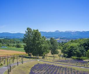 北海道 自然 田園風景 美瑛の写真素材 [FYI04564704]