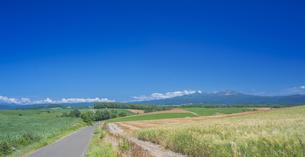 北海道 自然 田園風景 美瑛の写真素材 [FYI04564714]