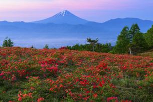 山梨県 甘利山のレンゲツツジと朝焼けの富士山の写真素材 [FYI04564815]