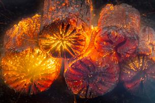 七輪の中で燃える炭の写真素材 [FYI04565241]