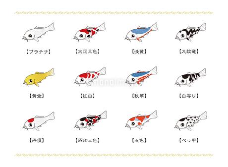 ニシキゴイの代表的な品種 一覧表 イラストのイラスト素材 [FYI04565388]