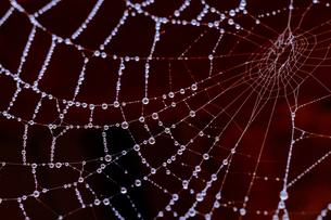 蜘蛛の巣に着いた水滴の写真素材 [FYI04565548]
