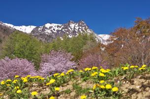 山部自然公園の桜と夕張山地の写真素材 [FYI04565603]