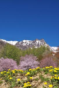 山部自然公園の桜と夕張山地の写真素材 [FYI04565604]